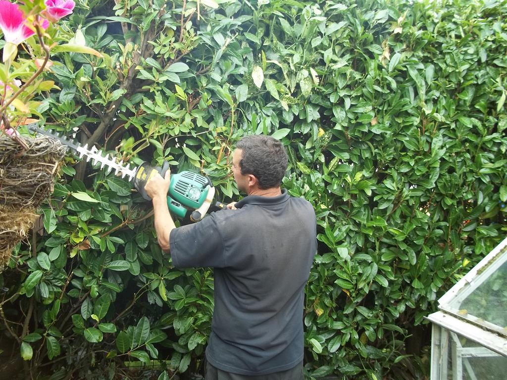 Mountain mist garden maintenance blackwood for Garden maintenance